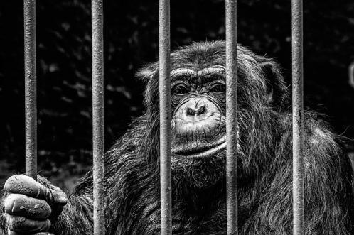 monkey-256420_640